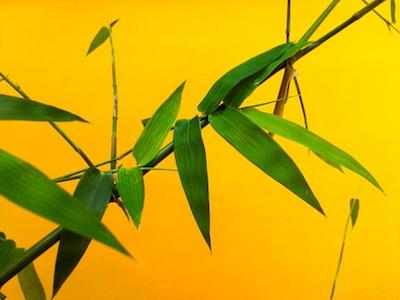 bamboo 400x300